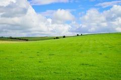Grünes Feld und blauer Himmel mit Wolkenhintergrund Lizenzfreie Stockfotos
