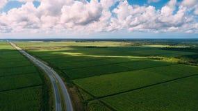 Grünes Feld und blauer Himmel Straße in der Mitte Stockbild