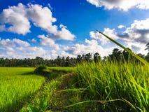 Grünes Feld und blauer Himmel und Wolken lizenzfreies stockfoto