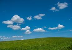 Grünes Feld und blauer Hintergrund des bewölkten Himmels Stockfotografie