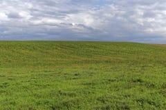 Grünes Feld und ein bewölkter Himmel Stockfotos
