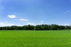 Grünes Feld und ein blauer Himmel Lizenzfreie Stockbilder