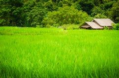 Grünes Feld und ein Häuschen Lizenzfreie Stockfotos