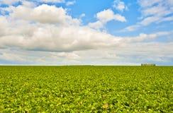 Grünes Feld und ein heller Himmel Stockbilder