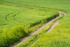 Grünes Feld und ein Schotterweg Stockfotos