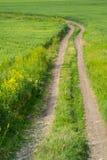 Grünes Feld und ein Schotterweg Stockfoto