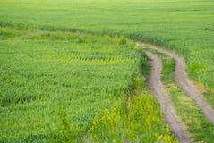 Grünes Feld und ein Schotterweg Stockfotografie