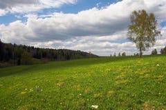 Grünes Feld und einsamer Baum. Lizenzfreies Stockfoto