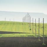 Grünes Feld und ETL Stockbild