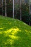 Grünes Feld und forrest Stockfoto