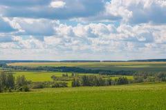 Grünes Feld und grünen weit weg Wald, blauen Himmel am Sommertag lizenzfreies stockbild