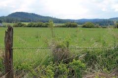 Grünes Feld und Hügel über einem Stacheldraht-Zaun hinaus Stockfotos