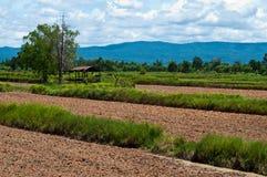 Grünes Feld und Hütte Lizenzfreie Stockfotos