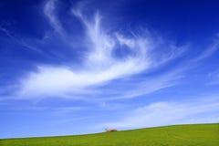 Grünes Feld und Himmel Stockfotos