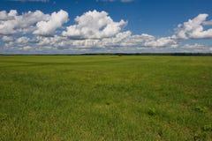 Grünes Feld und Himmel Lizenzfreies Stockfoto