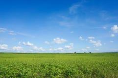 Grünes Feld und Himmel Lizenzfreie Stockbilder