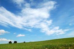 Grünes Feld und Himmel - Hintergrund Stockfoto