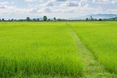 Grünes Feld und Himmel mit weißen Wolken Lizenzfreies Stockfoto