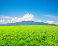 Grünes Feld und hohe Berge stockfotografie