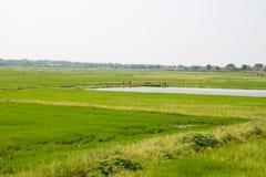 Grünes Feld und Lagune Lizenzfreie Stockbilder