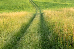 Grünes Feld und Pfad Stockbilder
