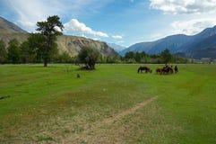 Grünes Feld und Pferde Stockfotos