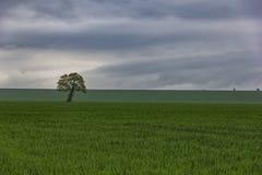 Grünes Feld und schöne Sonnenuntergangsommerlandschaft Stockfotos