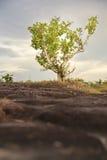 Grünes Feld und schöne Sonnenuntergangsommerlandschaft Stockbilder