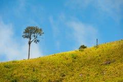 Grünes Feld und schöne Sonnenuntergangsommerlandschaft Lizenzfreies Stockfoto