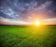 Grünes Feld und schöner Sonnenuntergang lizenzfreie stockfotografie