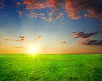 Grünes Feld und schöner Sonnenuntergang stockfotografie