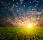 Grünes Feld und schöner Sonnenuntergang stockfoto