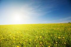 Grünes Feld und schöner Sonnenuntergang lizenzfreies stockbild