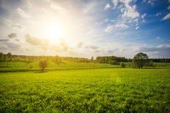 Grünes Feld und schöner Sonnenuntergang lizenzfreie stockbilder