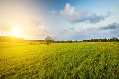 Grünes Feld und schöner Sonnenuntergang lizenzfreies stockfoto