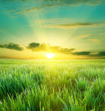 Grünes Feld und schöner Sonnenuntergang stockbild