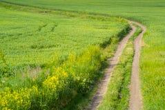 Grünes Feld und Schotterweg Stockfotografie