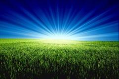 Grünes Feld und Sonne Lizenzfreies Stockbild