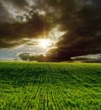 Grünes Feld und Sonnenuntergang Lizenzfreie Stockfotos