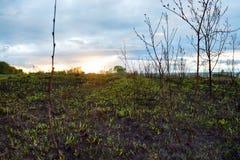 Grünes Feld und Sonnenuntergang Stockfoto
