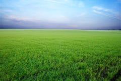 Grünes Feld und stürmischer Himmel Stockfotografie