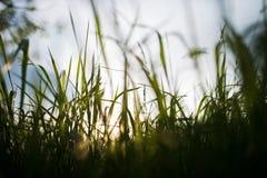 Grünes Feld und Sun Stockfotografie