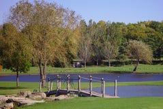 Grünes Feld und Teich Lizenzfreies Stockbild