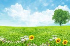 Grünes Feld und weiße Wolken Lizenzfreie Stockbilder