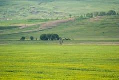 Grünes Feld und Wiesen Lizenzfreies Stockfoto
