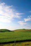 Grünes Feld und Wolken Lizenzfreies Stockfoto