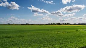 Grünes Feld und Wolken stockfoto