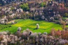 Grünes Feld unter Bäumen Stockfotografie
