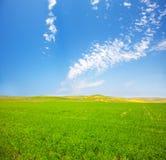 Grünes Feld unter blauem bewölktem Himmel lizenzfreies stockbild