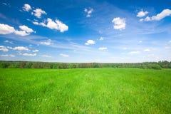 Grünes Feld unter blauem bewölktem Himmel lizenzfreie stockfotos